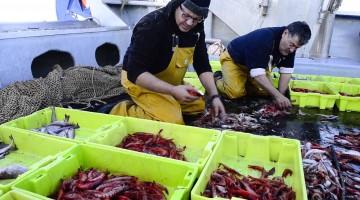 La gamba de Tarragona protagonista de la pròxima jornada gastronòmica